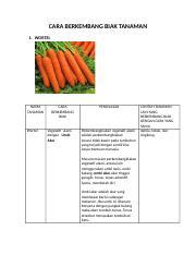 310740256 Cara Berkembang Biak Tanaman Docx Cara Berkembang Biak Tanaman 1 Wortel Nama Tanaman Wortel Cara Berkembang Biak Vegetatif Alami Dengan Umbi Course Hero