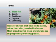 Trees and shrubs terms