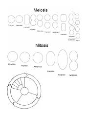 Cell division - diagram label - 7th.docx