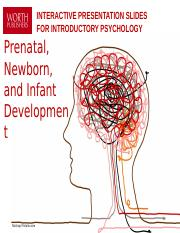6 Prenatal Infant Newborn Dev