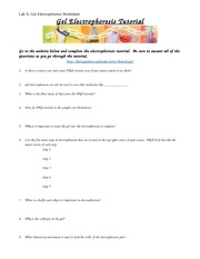 Lab 10_Gel ElectrophoresisWorksheet - Lab X Gel Electrophoresis ...