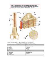 anatomy 6.doc