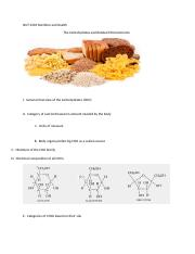 Outline Five The Carbohydrates and Related Micronutrients.doc