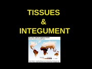 ANP 300 - Lecture 2 - Tissues