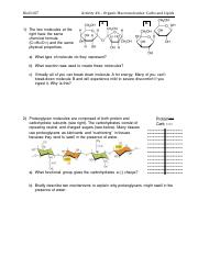 Activity #4 - Macromolecules-Carbs and Lipids.pdf