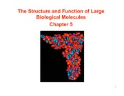 Topic 2 - Structure and function large bio molecules S10 1pp
