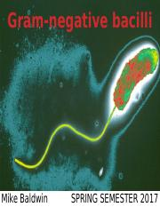 Gram-negative bacilli_SP2017