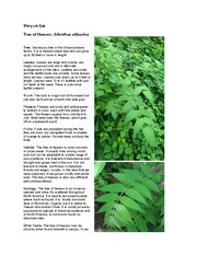 Tree of Heaven: Ailanthus altissima  assignment