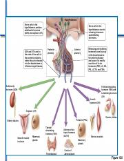 endocrine reproduction s11.pdf