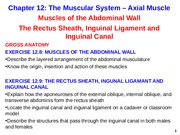 Axial Muscle Abdominal
