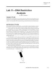 2010L_Lab11_DNA_Restriction_Anal_20171_PDF