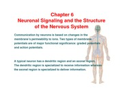 Nervous system review - ch 6 a-c