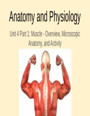 Unit 4 Part 1 - Muscle Overview, Microscopic Anatomy, and Activity.pptx