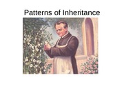 Patterns_of_Inheritance