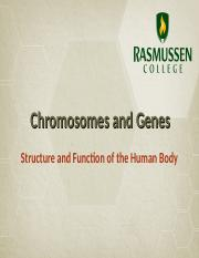 Chromosomes and Genes.ppt