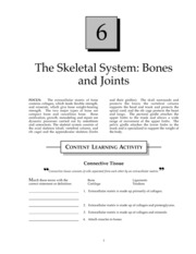 Skeletal System-Bones and Joints Study Guide