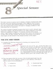 16 pages key_special senses reivew 2013pdf - Anatomy And Physiology Coloring Workbook Answers Chapter 7