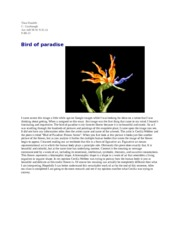 bird of paradise art essay