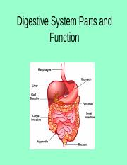 Digestive System Parts and Function 2011.ppt