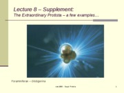 Lecture 8  Supplement Protista