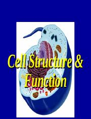 Cell parts and funtion
