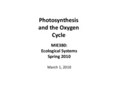 Photosynthesis and O2 cycle