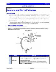 5- Nerves and Nerve Pathways Answers.pdf