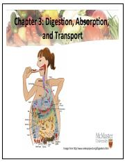 Week 3 (X) - Digestion, Absorption, and Transport.pdf