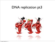 Lecture 4 DNA Replication pt 3 2013 slides
