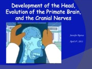 Head, brain, cranial nerves-JFB