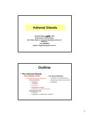 30 - Adrenal Glands.pdf