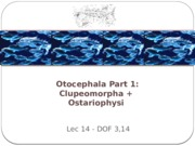 14-Otocephala copy