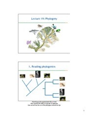1001A+Lec19Notes_phylogeny