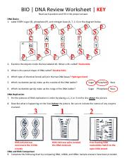 DNA Unit Review Worksheet.pdf - Name Date Period BIO | DNA ...