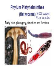 phylum platyhelminthes grafikus féreg nyelőcső papilloma hpv