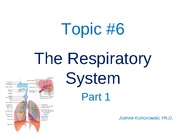 ANP 1105 The respiratory system,  part 1  2011 JK