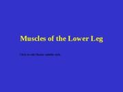 muscles lower leg