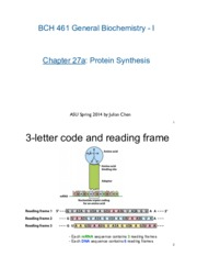 27a-Protein-Synthesis