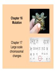 Chapter16 3PM class Dr. Stone.pdf