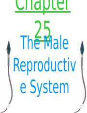 Chapter_25_-_Male_Reproductive_System