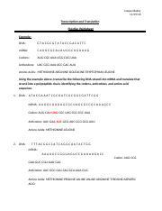 Transcription and Translation HW9.docx - Cooper Bailey ...