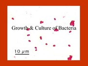 Bacterial-growth-conditions