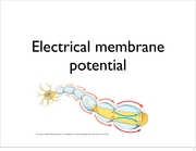 Electrical Membrane Potential