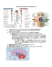 LS 2 Review Central Nervous System