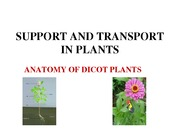Support and transport in plants (1)
