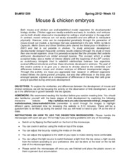 Mouse_and_chicken_embryos_handout(3)