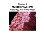 19+-+Skeletal+Muscle+Physiology