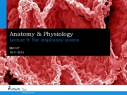 A&P Lecture 9 - Respiratory System.pdf