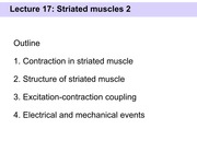 Slides 17 - Striated muscles 2(2)