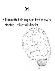 brain dissection3